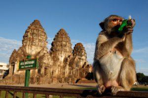 Monkey festival