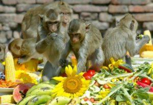 праздник обезьян в Таиланде