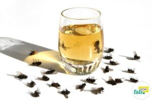 как быстро избавиться от мух